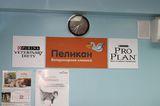 Клиника ЗВЦ Пеликан, фото №2